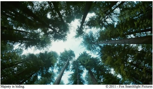 2011-05-31-Tree9.jpg