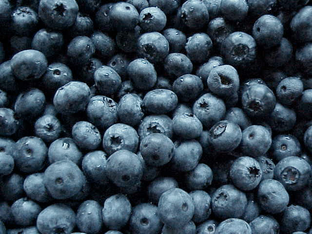 2011-06-01-blueberries.jpg