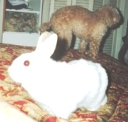 2011-06-10-BunnyonbedHP.jpg