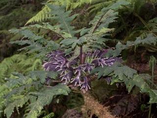 2011-06-11-Cyaneahorrida.JPG