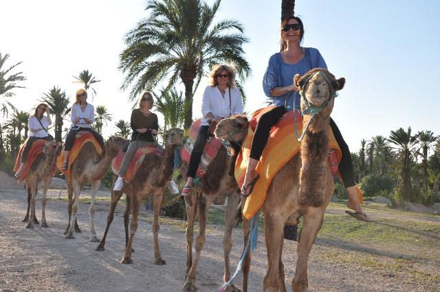 2011-06-13-CAMEL.jpg