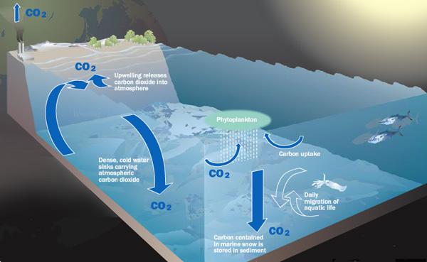 2011-06-20-Oceancarboncycle.jpg