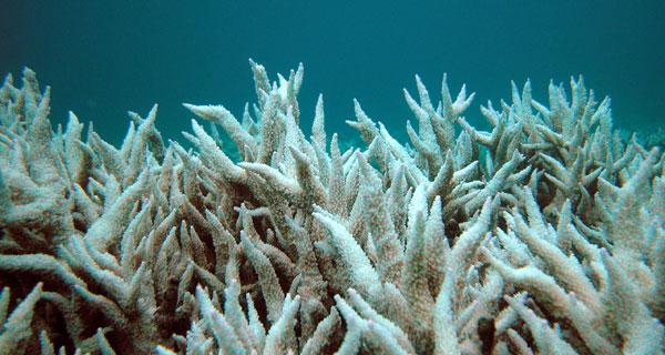 2011-06-20-coralforestIPSO.jpg