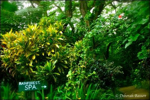 2011-06-26-rainforestspa.jpg