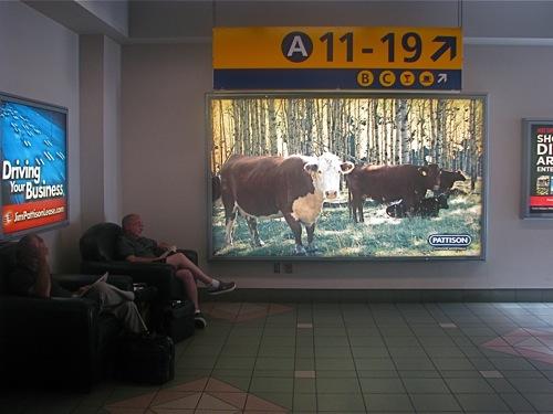 2011-07-05-CalgaryAirport.jpg