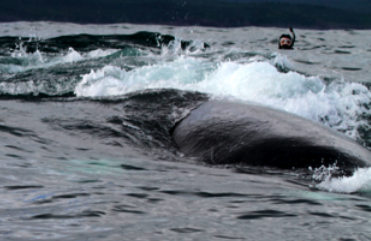 2011-08-06-ic7meandwhale.png