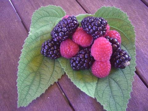 2011-08-09-berriesHP.jpg