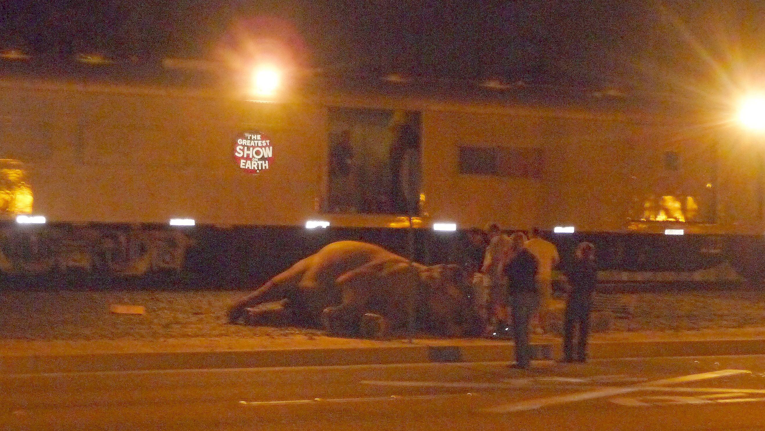 2011-08-10-elephantdownringling8711Anaheim21.jpg
