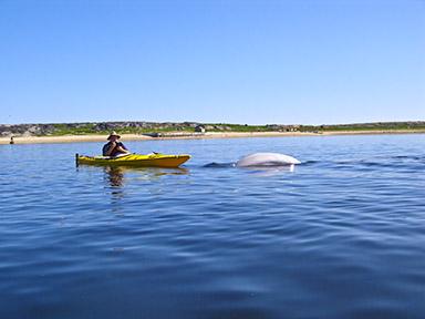2011-08-16-kayak.jpg