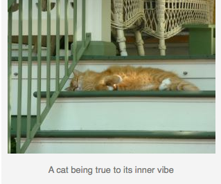 2011-08-18-Captionedcat.png