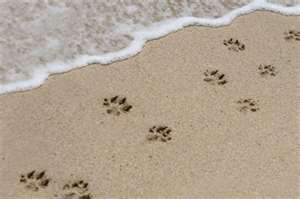 2011-08-28-pawprintsand.jpg