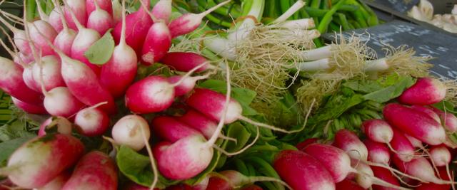 2011-08-31-images-smallradishes.jpg