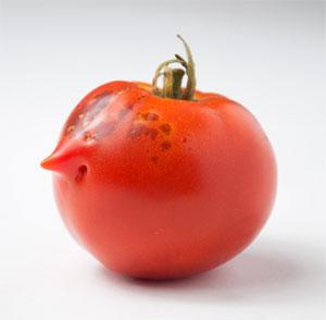 2011-08-31-tomato_face.jpg