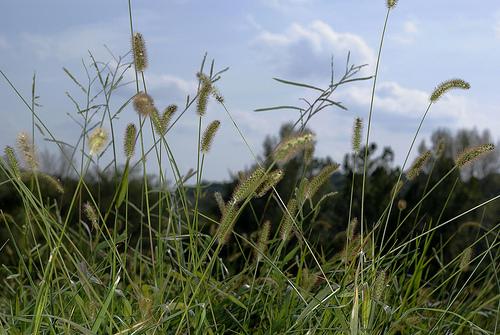 2011-09-01-prairie.jpg