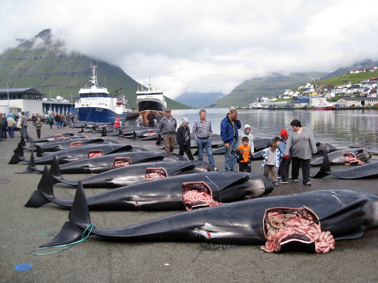 pilot whale hunting