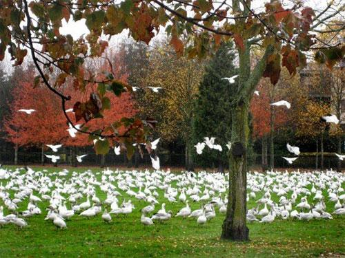 2011-09-09-birds.jpg