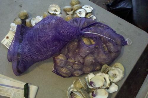 2011-09-12-clams.jpg