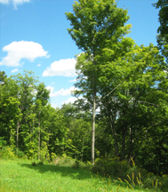 2011-09-17-VermontTreesWEB.jpg