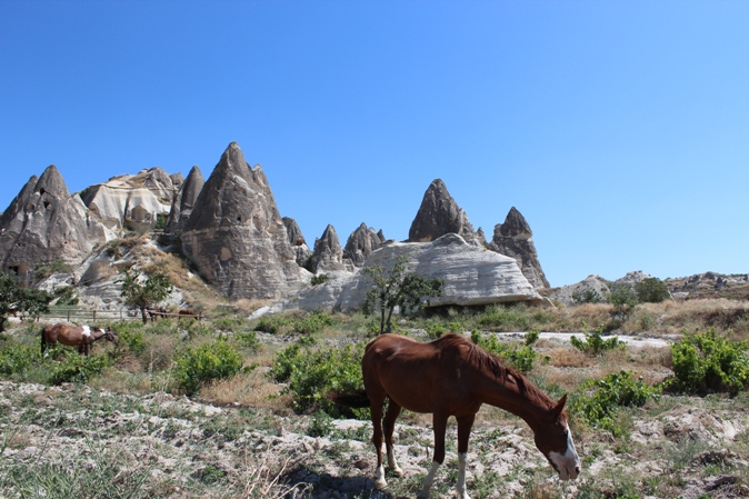 2011-09-21-horse.jpg