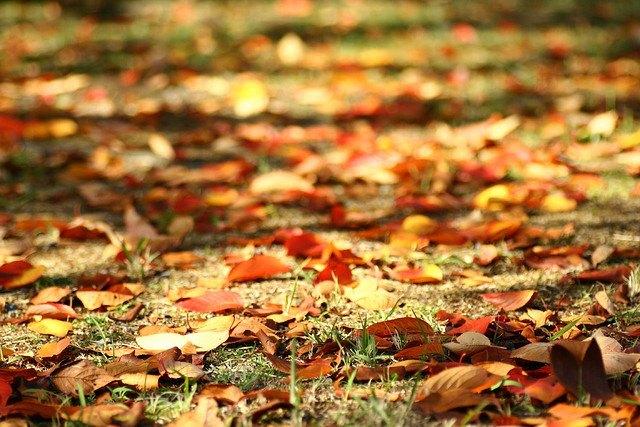 2011-09-23-leaves1_hiromama.jpg