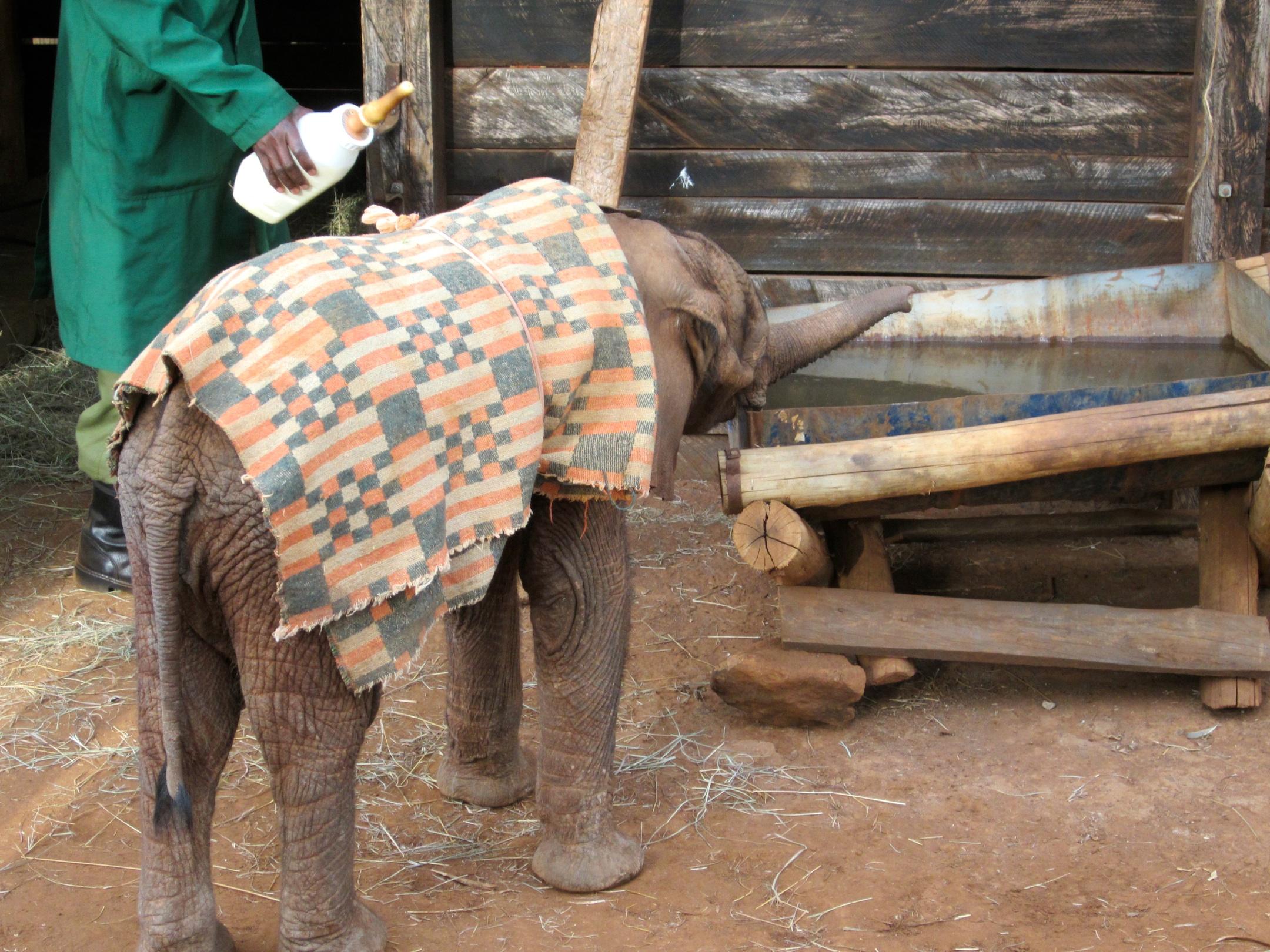 2011-09-25-elephantorphan1.jpg