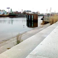 Newtown Creek Nature Walk Image by Molly Riordan