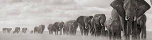 2011-10-18-elephants.jpg