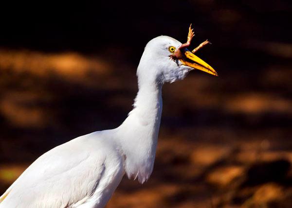 2011-10-25-birdheinrich600cm102511.jpg