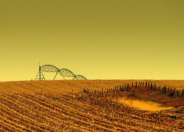 2011-10-31-corn.jpg