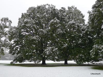 2011-10-31-trees.JPG