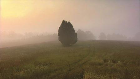 2011-11-08-treeatsunrise.jpg