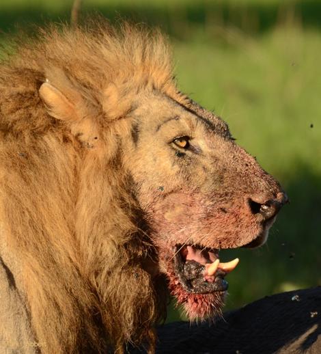 2011-11-23-lionstory1.jpg