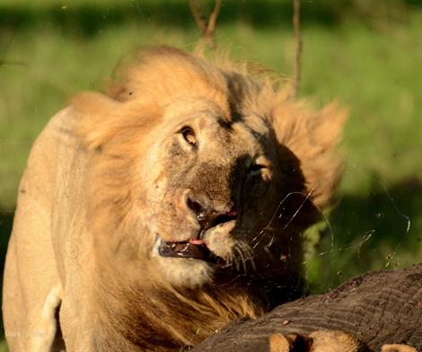 2011-11-23-lionstory3.jpg