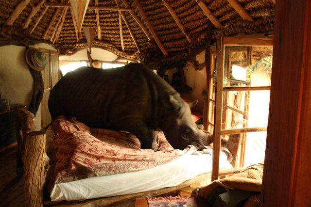 2011-11-30-rhino.jpg