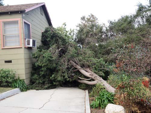 2011-12-04-Treedownsmaller.jpg