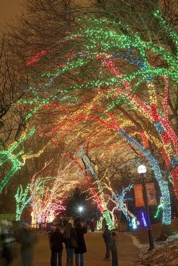 2011-12-09-ZooLightsChicago.jpg