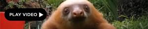 2011-12-13-sloth.jpg