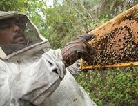 2011-12-14-Honeybees.JPG