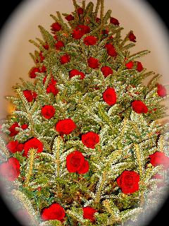 2012-01-03-RosePhotographs.jpg