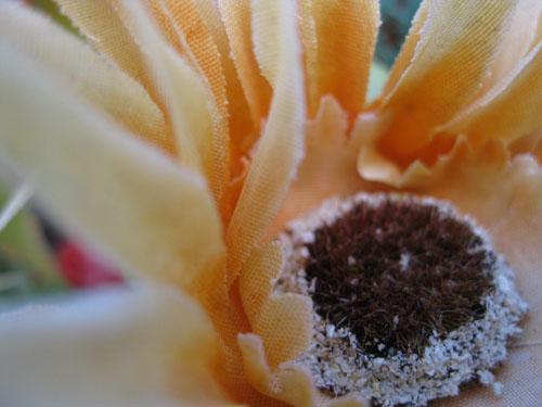 2012-01-05-Flower107.jpg