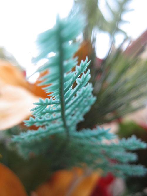 2012-01-05-Flower108.jpg