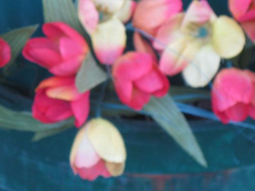 2012-01-05-Flower110.jpg