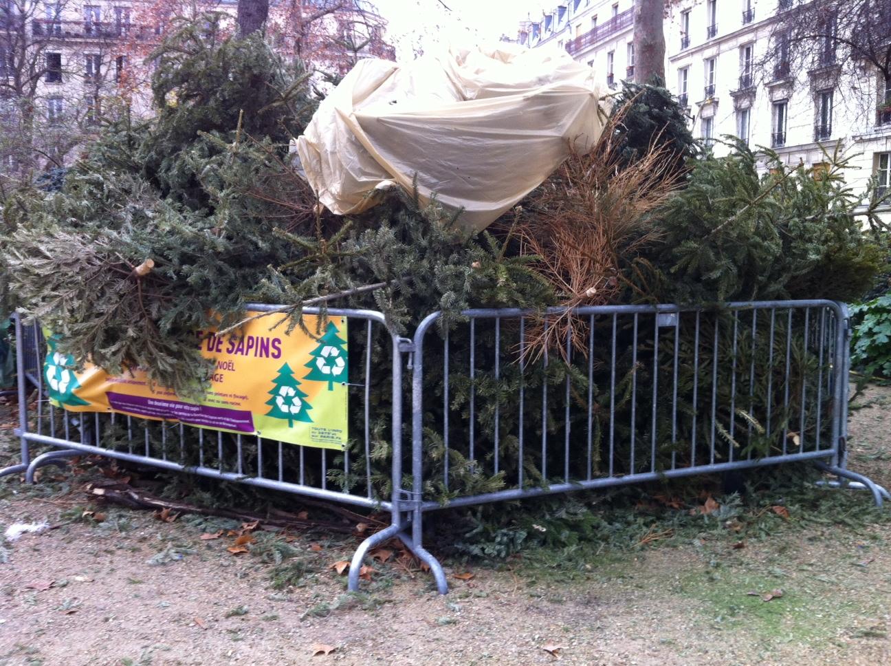 2012-01-10-images-Xmastreerecyclingsmall.JPG