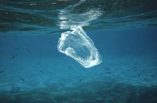 2012-01-11-NOAAreef2129plasticbagm.jpg