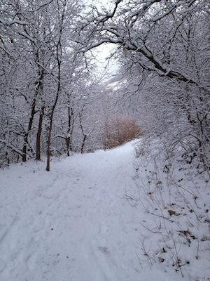 2012-01-11-Winterwonderland.jpg