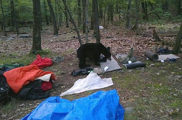 2012-01-17-Bear.jpg
