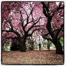 2012-01-26-SpringinBloom.JPG