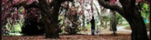 2012-01-26-SpringinBloom5555.jpg
