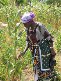 2012-02-03-beneficairy_families_inspecting_crops_web1.jpg