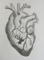 2012-02-12-HeartAnatomyphoto.jpg